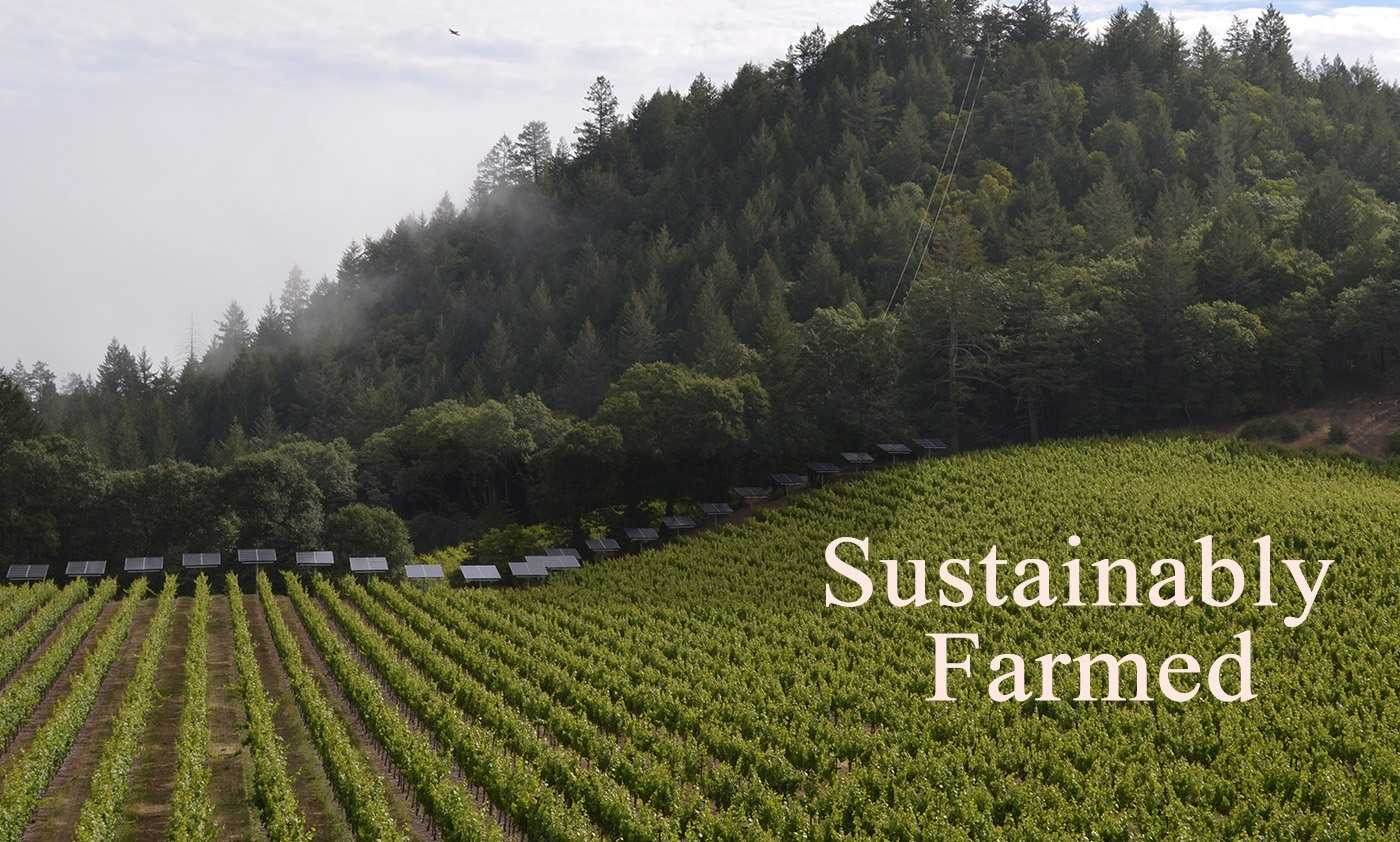 keenan_winery_sustainably_farmed4