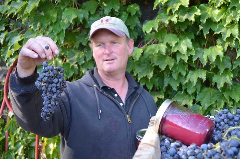 Family Owned Estate Napa Winery Harvest Season News